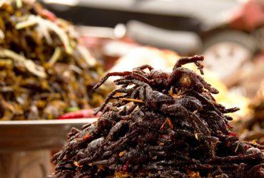 Kết quả hình ảnh cho nhện campuchia